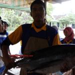 Ikan tuna segar siap diolah